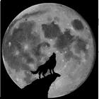 avatar for stinkeytoe8