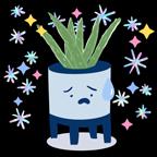 Concerned Aloe