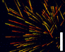 Play Particle Pong