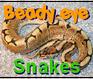 Play Beady Eye:Snakes