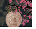 Play Moon Dream