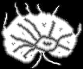 Play Parasite Quest