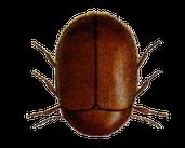 Play Cigar Beetle Blaster