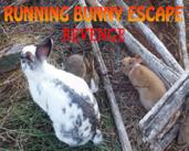Play Running Bunny Escape Revenge!