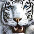 avatar for gecuTa