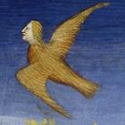avatar for optravisprime