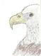 avatar for pr2prider