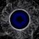 avatar for Xelkova