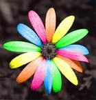 avatar for blossom799