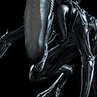 avatar for Wildnub