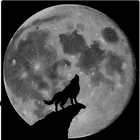 avatar for CallOfDuty213