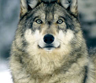 avatar for JamesXUltima