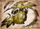 avatar for SilentHidden