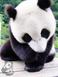 avatar for BeversPanda