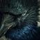 avatar for RagdollDark