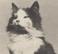 avatar for DanielM1233