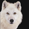 avatar for tissidya