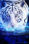 avatar for Saberess