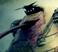 avatar for NetRunner16